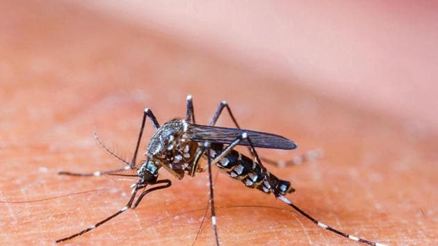 No mosquito I had encountered had the gall to transmit dengue to me! I'd been bitten galore but beyond the scratchy itch that produces nothing more serious had come to pass.(Shutterstock)