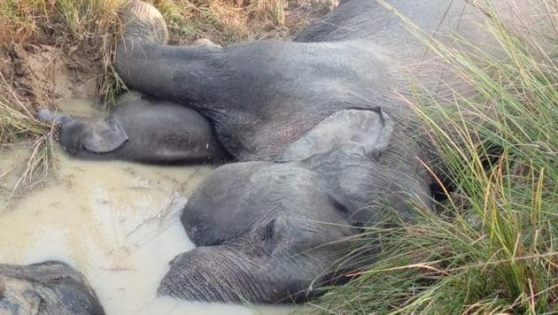 At least seven elephants died of electrocution after coming in contact with a sagging power line in Odisha's Dhenkanal district Friday night.(HT Photo)