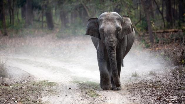 The elephant hit the vehicle repeatedly with its trunk, upturning it and damaging some of its parts.(Representational Image)