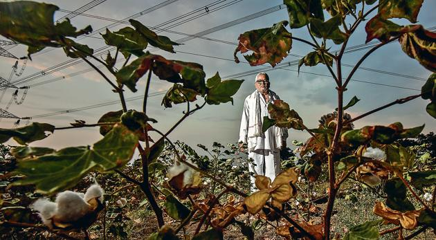 Ganesh Nevde, a former sarpanch of Kamkheda village in Beed district, says he has suffered losses of Rs6,000 for every acre of his 12-acre cotton fields as rains failed this year. He has no money to sow the crop next monsoon.(Kunal Patil/HT Photo)