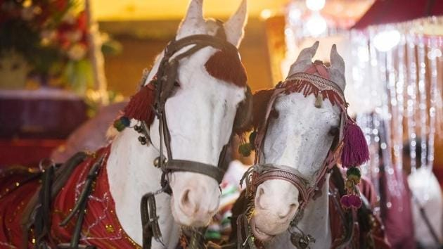 Many bridegrooms in Delhi NCR have decided to not opt for the customary ride on the mare in light of PETA's campaign(Getty Images/iStockphoto)