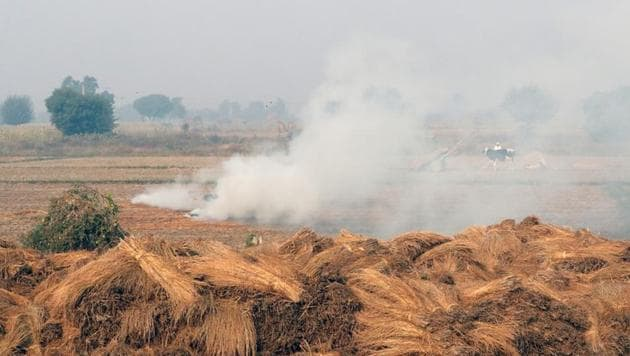 Ikea wants to turn rice straw into household wares in a move that could end up reducing a major source of pollution in India.(Reuters File Photo)