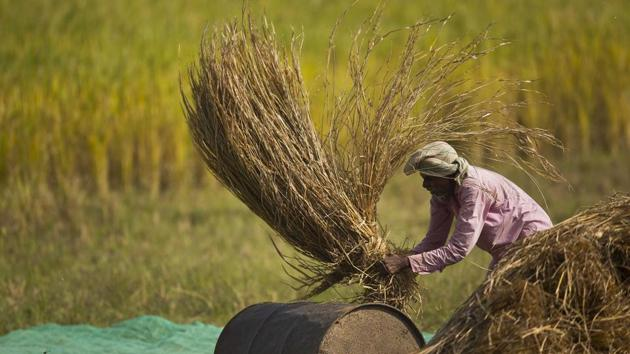 Farmers recount how the prices they are getting today are only a small fraction of what they used to get earlier.(AP/Picture for representation)