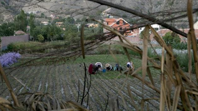<p>Women farmers plant radishes in a field that gets irrigated with sewage water that comes from the nearby river in Valencia, Bolivia. For farmer Richard...