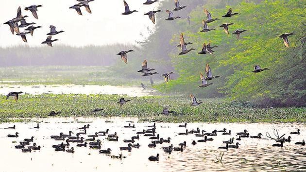According to an official, the availability of fresh water and habitat improvement at the Okhla Bird Sancturay has paid off and resulted in birds choosing this area for nesting.(Sunil Ghosh / HT Photo)