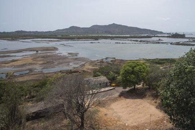 Konkan commissioner has said that pending cases of mangrove and wetland destruction along Konkan will remain pending until all destroyed areas are restored.(HT Photo)