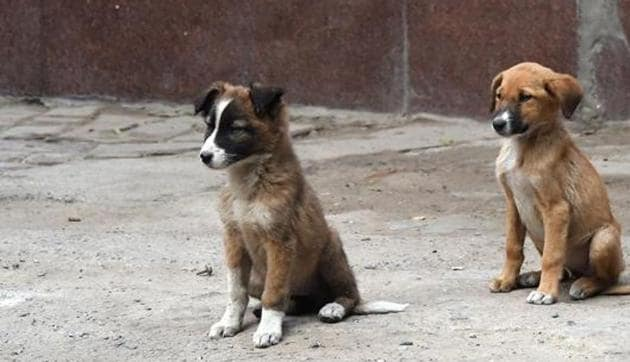The world is divided into two kinds of people — those who love dogs, and those who don't.(AFP File / Representative Photo)