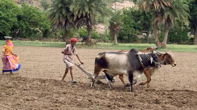 Farmers should enjoy access to any technology including GM in markets. Any 'waiver' must be embedded in liberal reforms of agrarian political-economy.(HT File)
