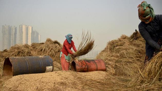 Farm workers in Noida thrash freshly harvested paddy crop to separate the grains.(AP Photo)