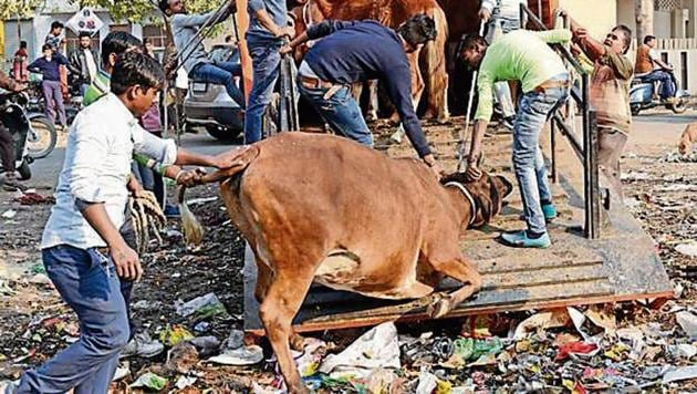 The stray cattle menace has become a matter of concern for the public and the authorities in UP.(Subhankar Chakraborty/HT PHOTO)