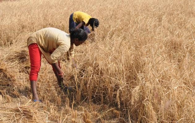 The centre has reportedly approved the drought package for Jharkhand and the fund is expected to be released this week, officials said on Tuesday.(Diwakar Prasad/ Hindustan Times)