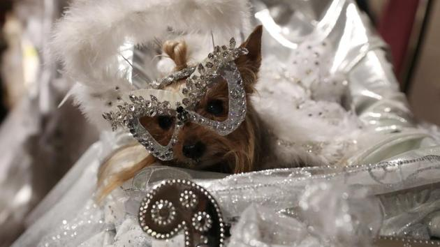 A dog sits in a jewelled carriage. Four catwalk shows took place this year, with themes like Hollywood dreams, angels and demons, international masquerade and best in show. (Shannon Stapleton / REUTERS)