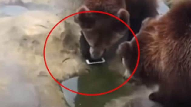 The incident took place at Yancheng Wildlife Park in China's Jiangsu Province.(CGTN/Facebook)