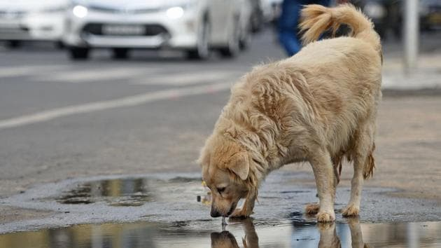 A man was bitten multiple times by another man after he berated the latter for thrashing a dog, police said here Wednesday.(Pratik Chorge/HT PHOTO/ File Photo)