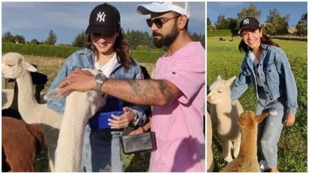 Anushka Sharma and Virat Kohli playing with alpacas.(Instagram)