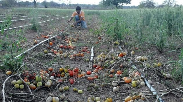 The winner in the agriculture category can work along with the agriculture department on its recently launched Maha-AgriTech programme that aims to bring in greater predictability from sowing to harvesting by use of drones and satellites.(HT File Photo)