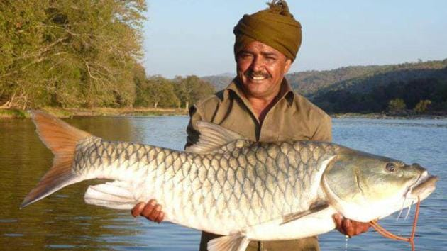 The Cauvery is subject to an intense range of anthropogenic impacts which act either independently or in combination to threaten the existence of fish populations and all aquatic flora and fauna, Adrian Pinder, a fisheries scientist, said.(Peter Dracup)