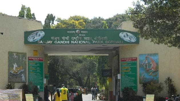 Sanjay Gandhi National Park (SGNP) has an area of 103 square kms and it is estimated the forest has between 35 and 40 leopards.(HT FILE)