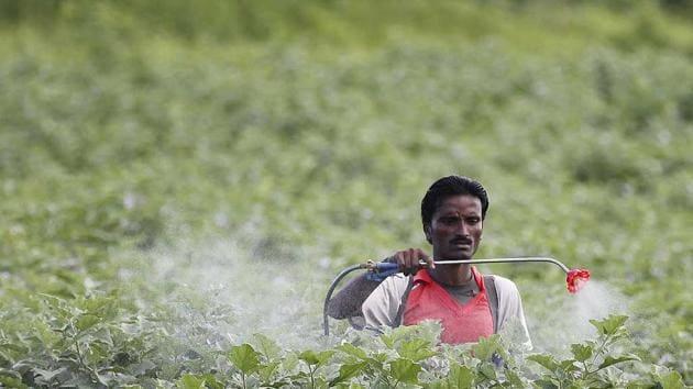 A farmer sprays pesticide in the cotton field at Pandharkawada in Maharashtra.(Raj K Raj/ Hindustan times)
