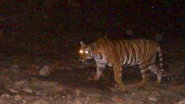 A team of six guides, a livestock development officer (LDO) – authorised veterinarian, and the driver tried to rescue the tigress using a net(HT Photo)
