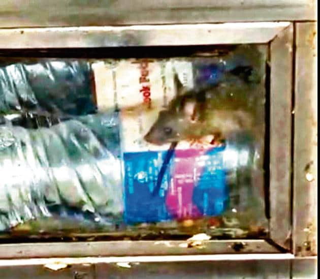 In the video posted by an alert commuter on Saturday, a rat can be seen climbing a bottle inside the cabinet of a food stall on platform number 2 of Bandra station(HT Photo)