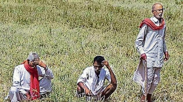 Agriculture has always been a crucial poll issue in Rajasthan, where about 70% of the population lives in villages.(HT File Photo)