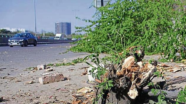 Tree felling to widen 11 entry and exit points along Delhi-Gurgaon Expressway left environmentalists and traffic experts in the city baffled.(Yogendra Kumar/HT PHOTO)