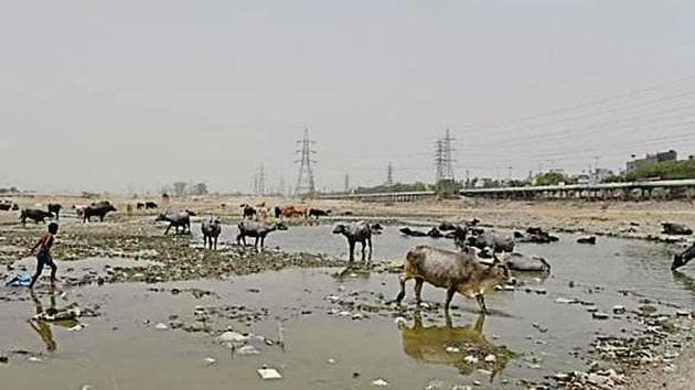 Ghonda Gujran, where the processing plant is coming up, is in the 'O Zone' or the Yamuna riverfront.(HT File Photo)