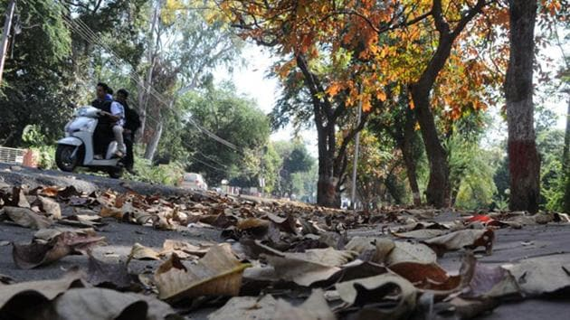 A section of experts said that as the winter chill extended well into March, the process of shedding of leaves and flowering has been delayed this year.(HT file photo)