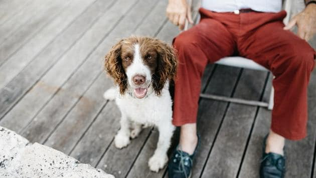 According to a recent study, having a pet can help older adults cope with mental and physical health issues.(Unsplash)