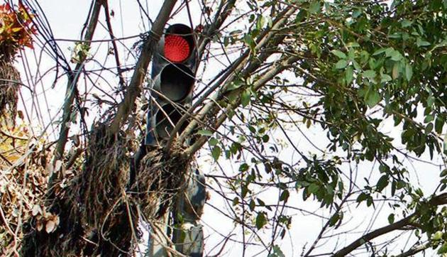 At Aggarwal Dharamshala Chowk, commuters travelling from the Gurudwara road towards the Civil Lines faced a major problem in deciphering whether the signal had turned green or not as the signal was hidden by the branches of a tree.(HT Photo)