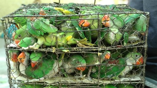 Parakeets locked inside cramped cages like this one were rescued by wildlife authorities n Kolkata on Sunday.(HT Photo)