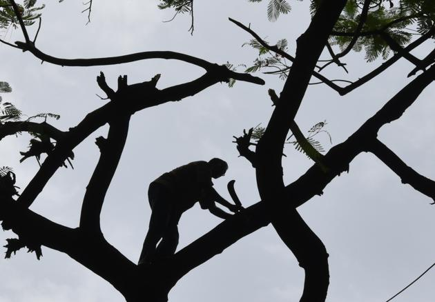 Between January 1 till April 5 this year, 12 tree felling notices were issued by BMC, affecting 3,588 trees or an average of 37 trees per day.(Kunal Patil/HT Photo)