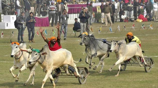 A file photo Kila Raipur Rural Sports Festival in Ludhiana.(HT File Photo)