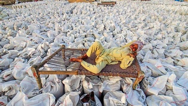 State agencies are expecting 132 lakh tonnes to arrive for procurement and the entire crop is expected to reach mandis in next ten days.(HT Photo)