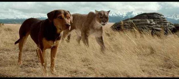 On her way home, Bella has to stave off starvation and wolf attacks while also ensuring the safety of an orphaned cougar cub.