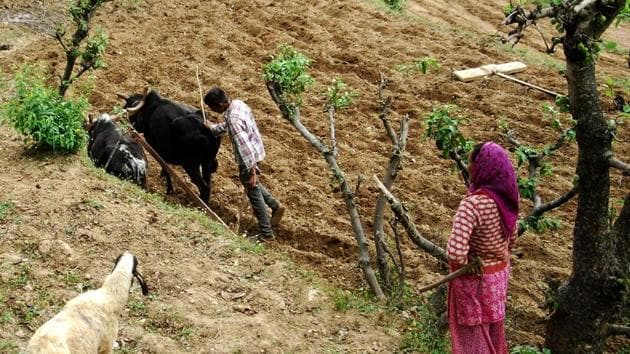 Forty two villages from five districts of Uttarakhand have been selected for organic farming project.(HT Photo / Representative Image)