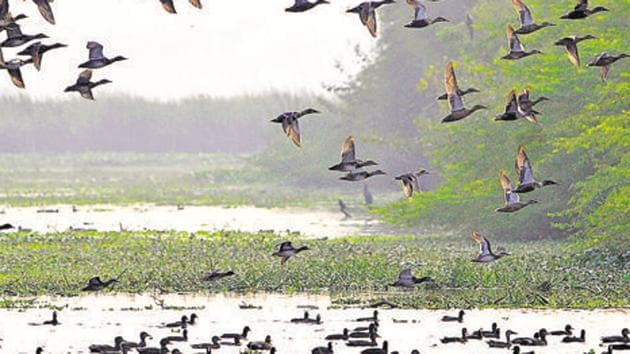 The land-owning agency has roped in CR Babu, who heads the Centre for Environmental Management of Degraded Ecosystems (CEMDE) at the Delhi University, for the project.(Sunil Ghosh / Hindustan Times)