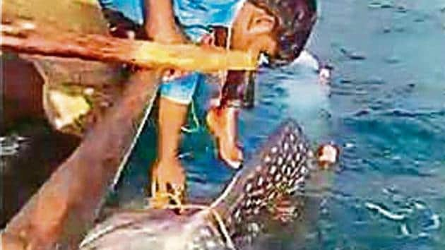 Ganesh B Nakhawa, chairman, Maharashtra Purse Seine Fishermen Welfare Association, of which Khopatkar is a member, said awareness about protected marine species needs to be spread among the fisherfolk(HTPhotos)
