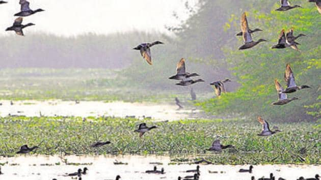 A view of Okhla bird sanctuary in Noida.(Sunil Ghosh / HT Photo)