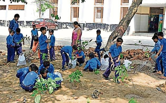 The Delhi government has set a target to plant around 2.2 million saplings across the national capital this fiscal.(HT file photo)