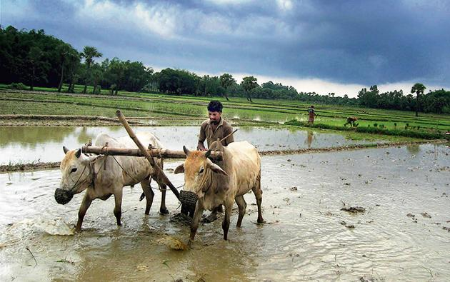 Over 20% of our farmers live below the poverty line. Evidence suggests that the speed with which the agriculture sector reduces rural poverty is at least twice of what the rest of the economy and when growth in agriculture is rejuvenated, poverty decline became faster.(PTI)