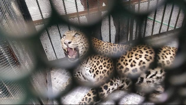 Kakodkar said strict monitoring was essential to ensure the downward trend would continue in the number of wildlife deaths due to electrocution.(HT Photo)