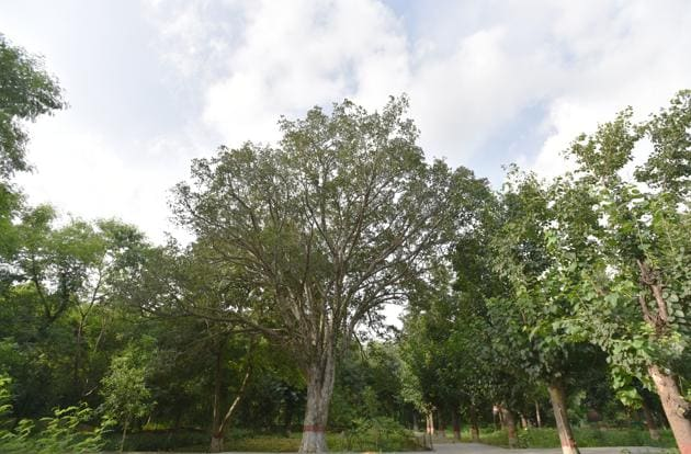 "Public sector undertakings (PSUs) and private companies may be given a chance to raise these trees and earn from it,"" a senior official said.(Anushree Fadnavis/HT File Photo)"