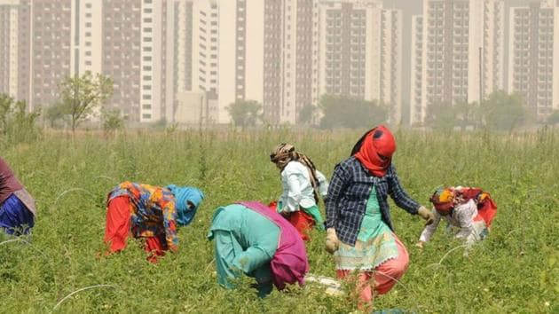 The horticulture department has adopted two villages to promote micro-irrigation among farmers for better conservation of water.(Parveen Kumar/Hindustan Times)