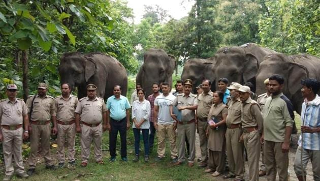 RK Tiwari, sub-divisional forest officer (SDO) Kalagarh said the instructions had been issued by principal chief conservator of forests (PCCF) Jai Raj, who visited the elephant shelter in Kalagarh on Thursday.(HT PHOTO)