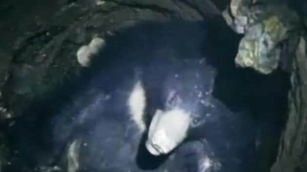 A sloth bear gatecrashed a wedding in Chhattisgarh's Mahasamund for food, but ended up falling to a well. The wild animal ventured into a kitchen which was serving food for a wedding. A mob attempted to chase the bear away after it injured four people. While trying to escape, the bear fell into a 45-foot deep well. The Chhattisgarh Forest Department was alerted, and with assistance from Wildlife SOS, an NGO, it rescued the bear and released it into the wild again.