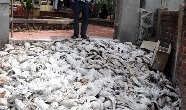 Residents were shocked to see hundreds of dead fish floating on the Khidkali lake in Mumbra.(Rishikesh Choudhary/HT)