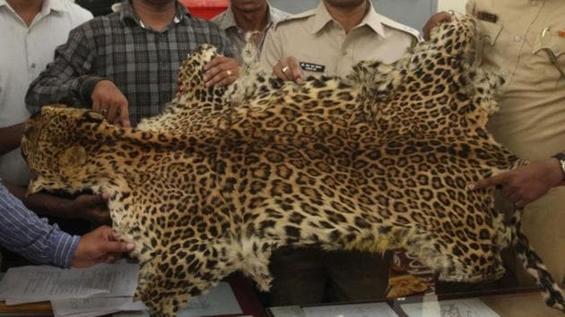 Yeoor forest department officials seized the leopard skin and booked five people in the case.(HT Photo)