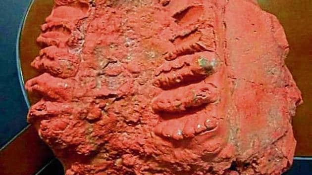 In 2000, similar elephant fossils were found in Kashmir in a saffron field near Srinagar by some geology students who reported the find to the experts.(HT Photo)